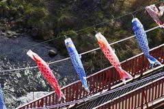 定山渓・鯉のぼり-高山橋5.JPG