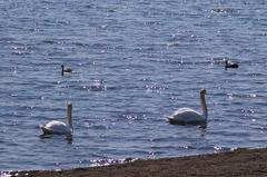 春うららかな洞爺湖.JPG