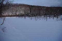 冬の「青い池」.JPG