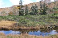 ニセコ神仙沼湿原2.JPG