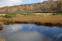 ニセコ神仙沼湿原3.JPG