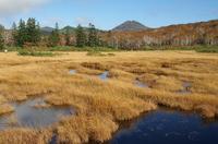 ニセコ神仙沼湿原1.JPG