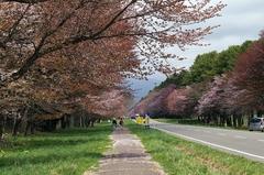 二十間道路桜並木-6.JPG