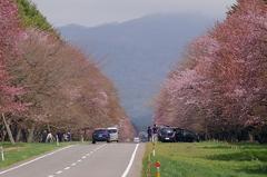 二十間道路桜並木-9.JPG