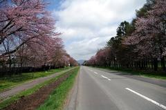 二十間道路桜並木-2.JPG