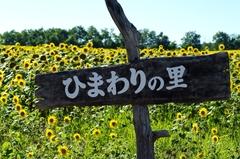 北竜町「ひまわりの里」.jpg