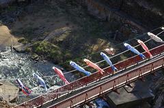 定山渓・鯉のぼり-高山橋4.JPG