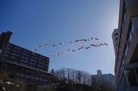 定山渓・鯉のぼり-月見橋2.JPG