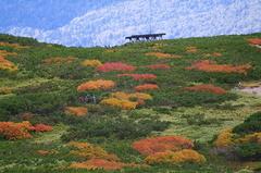 広がる紅葉の旭岳.JPG