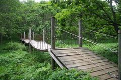 釧路市湿原「つり橋」.JPG