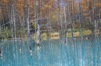 青い池-3.JPG