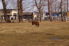 近藤牧場の傍.JPG