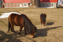 近藤牧場の馬.JPG