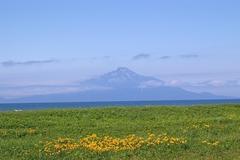 エジカンゾウのサロベツ海岸から利尻富士.JPG