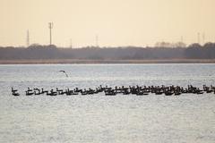 ウトナイ湖渡り鳥2.jpeg