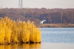 ウトナイ湖白鳥.jpeg