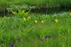 サロベツ湿原.JPG