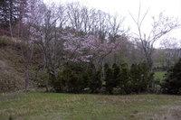 中小屋温泉「岩風呂から桜」