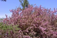 百合が原公園 リリートレインから桜