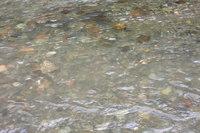ウソタンナイ川鱒の遡上2