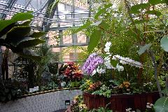 北海道大学付属病院温室