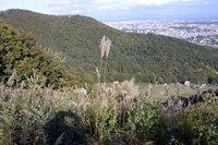 藻岩山観光道路から札幌市内