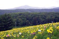 オーンズ春香山ゆり園サンシャインコース側.jpeg