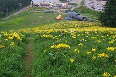 オーンズ春香山ゆり園サンシャインコースから下を見る.jpeg